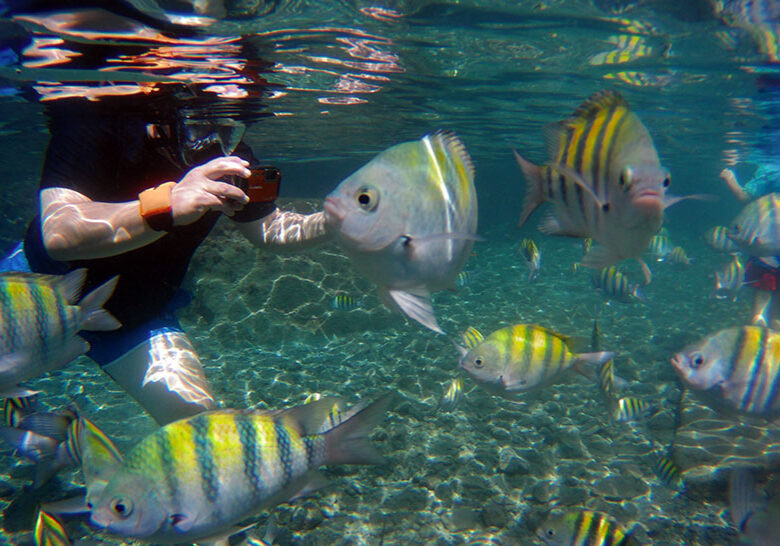 Snorkeling among Sergeant Major Fish at Jalousie/Sugar Beach, Spencer Ambrose Tours ,St. Lucia